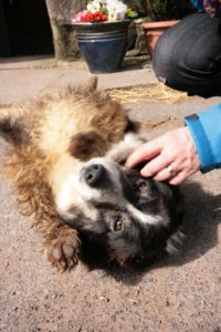 Blakeley Farm Dog