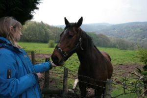 helen and horse