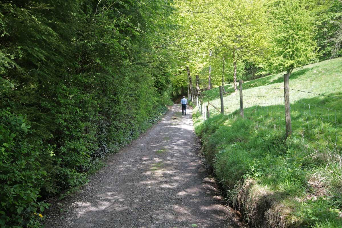 Ferret walking