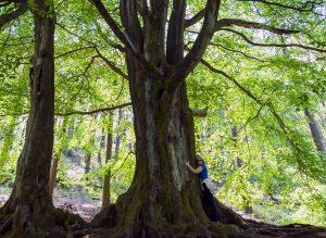 Helen-and-tree-Gradbach