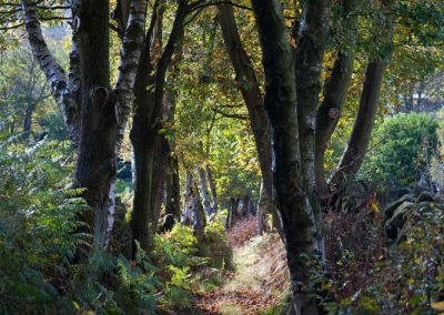 Stroll in Ancient Woodland