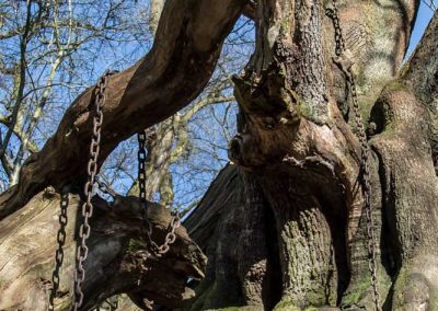 The Chained Oak (Inspiration for Hex)