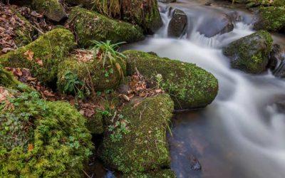 Staffordshire Walks – Oakamoor & Whiston